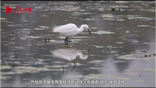 行动起来,共建美丽中国