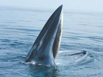 """10月6日焦点图:壮观!鲸鱼国庆到涠洲岛""""闹海"""""""