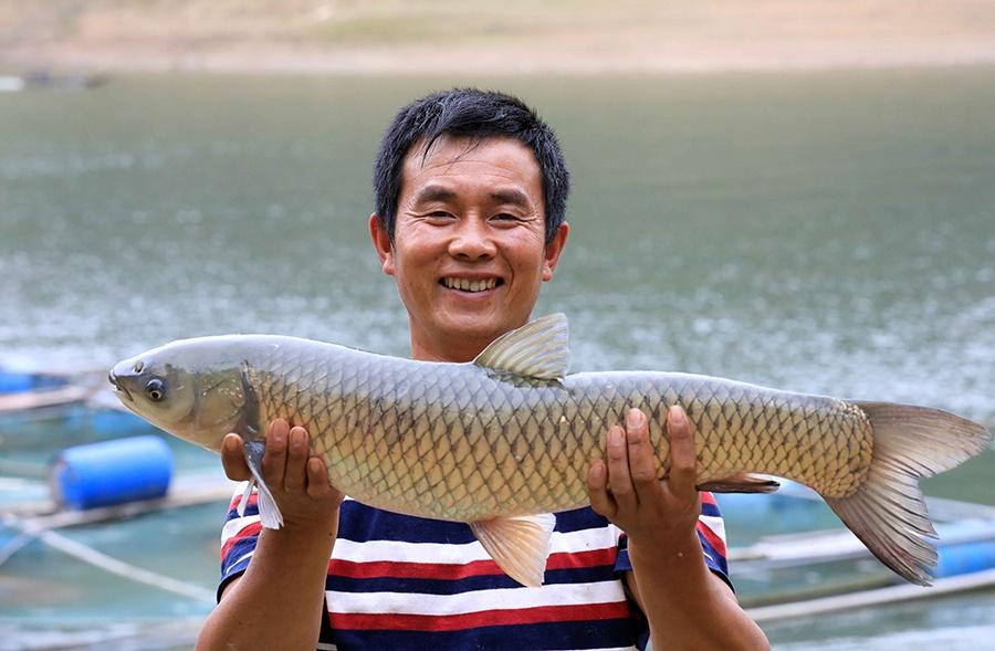广西融安:刘文香的养鱼脱贫路