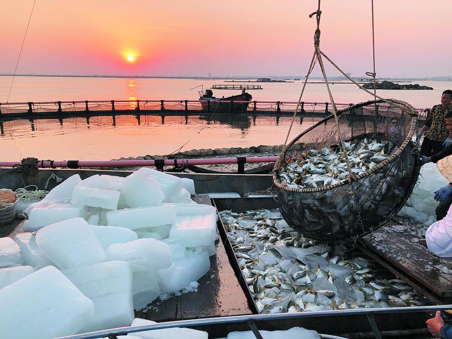 北海£º深海养殖业打开欧美市场