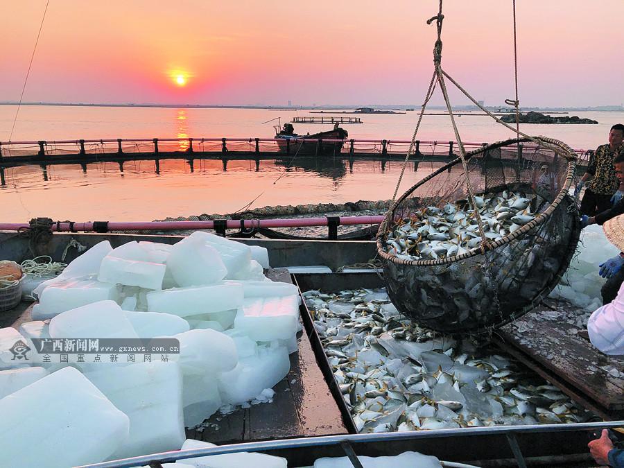 北海:深海养殖业打开欧美市场