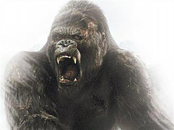 11月17日焦点图:广西曾是灭绝物种