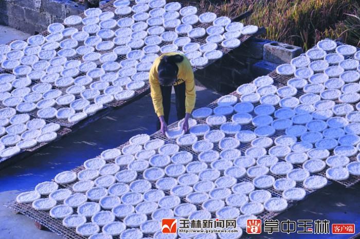 兴业县葵阳镇旧县村:暖冬季节,制作白散