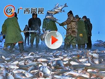 冬日奇观!查干湖冬捕数十万斤鲜鱼跃然冰上
