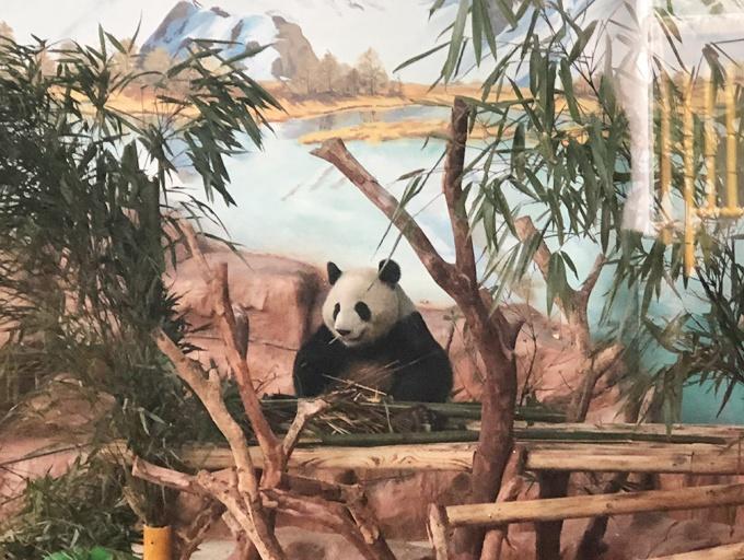 视频合集:大熊猫