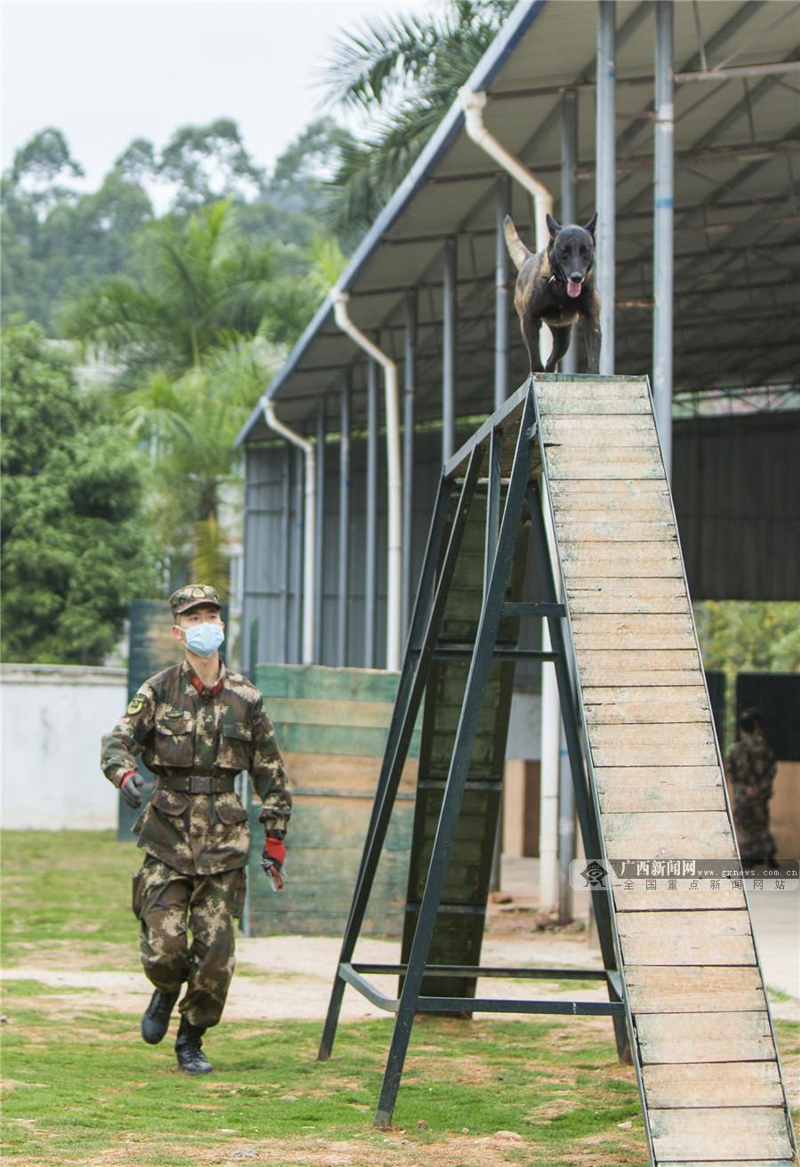 高清组图:走近军营中的无言战友