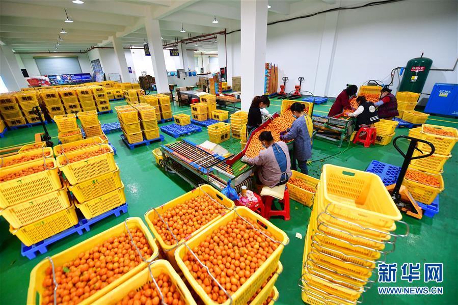 广西融安:电商复工助桔农
