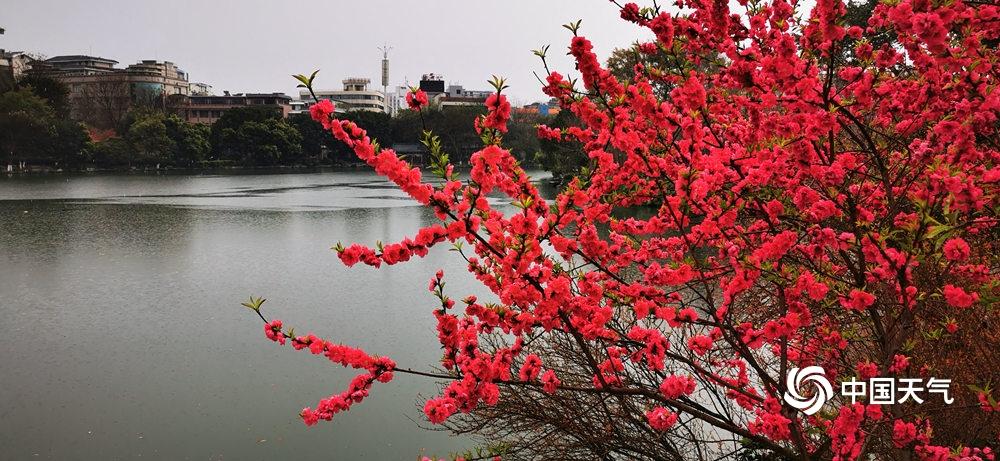 高清组图:广西各地春暖花开 景色美不胜收