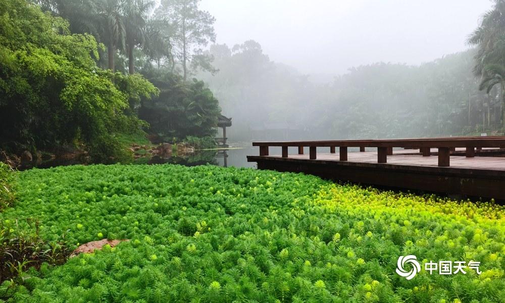 高清组图:南宁青秀山公园雾气弥漫 好似仙境一般