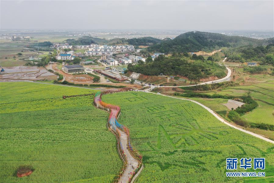 高清组图:春到乡村,宾阳县古辣镇菜花一片金黄