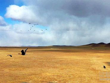内蒙古:巡护踏查 保护候鸟