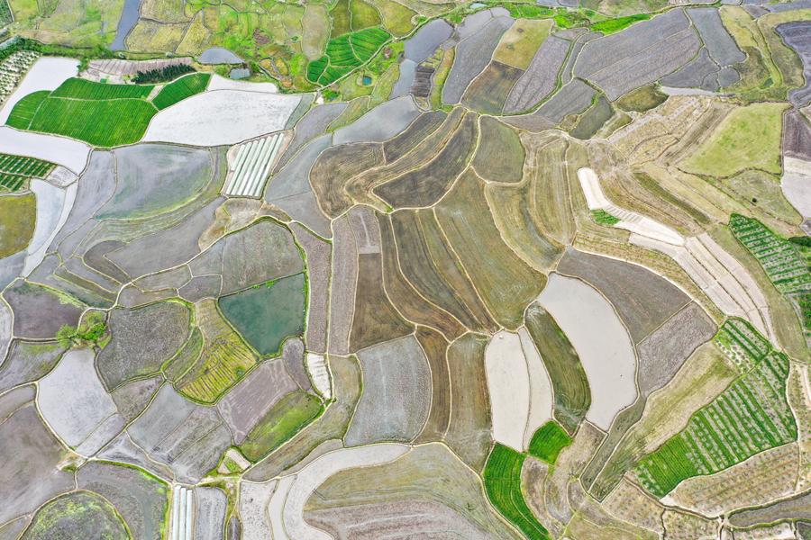 航拍:千亩水稻田与村庄相互映衬 山村田园美如画