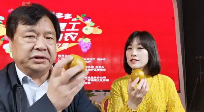 桂林副市长带货直播:永福罗汉果 正宗清肺果