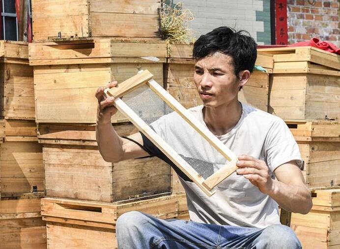 """蜜蜂养殖""""酿""""出百坭村甜蜜脱贫事业"""