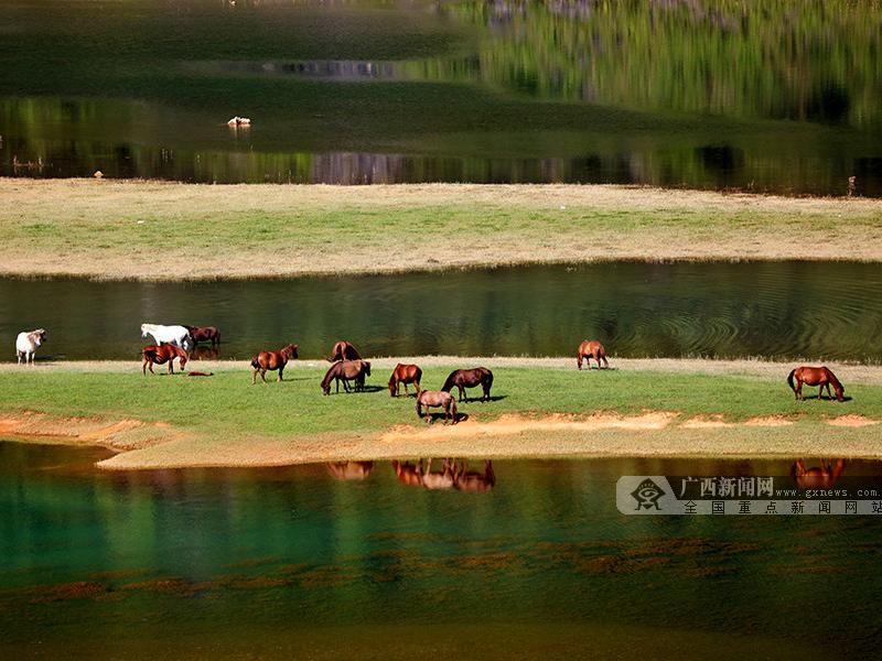 高清圖集:德保青龍湖畔特色養殖成就壯麗景色