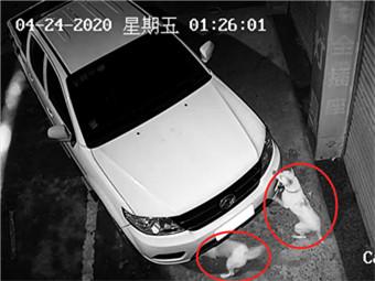 高清图:面包车深夜撞向卷闸门 肇事者竟是猫和狗