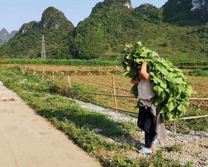 桂西边境山村走访见闻