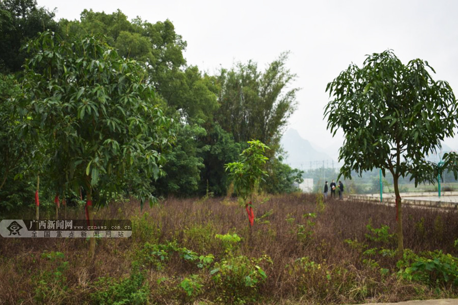 来宾市开展足球场地建设实地核查调研工作(图)