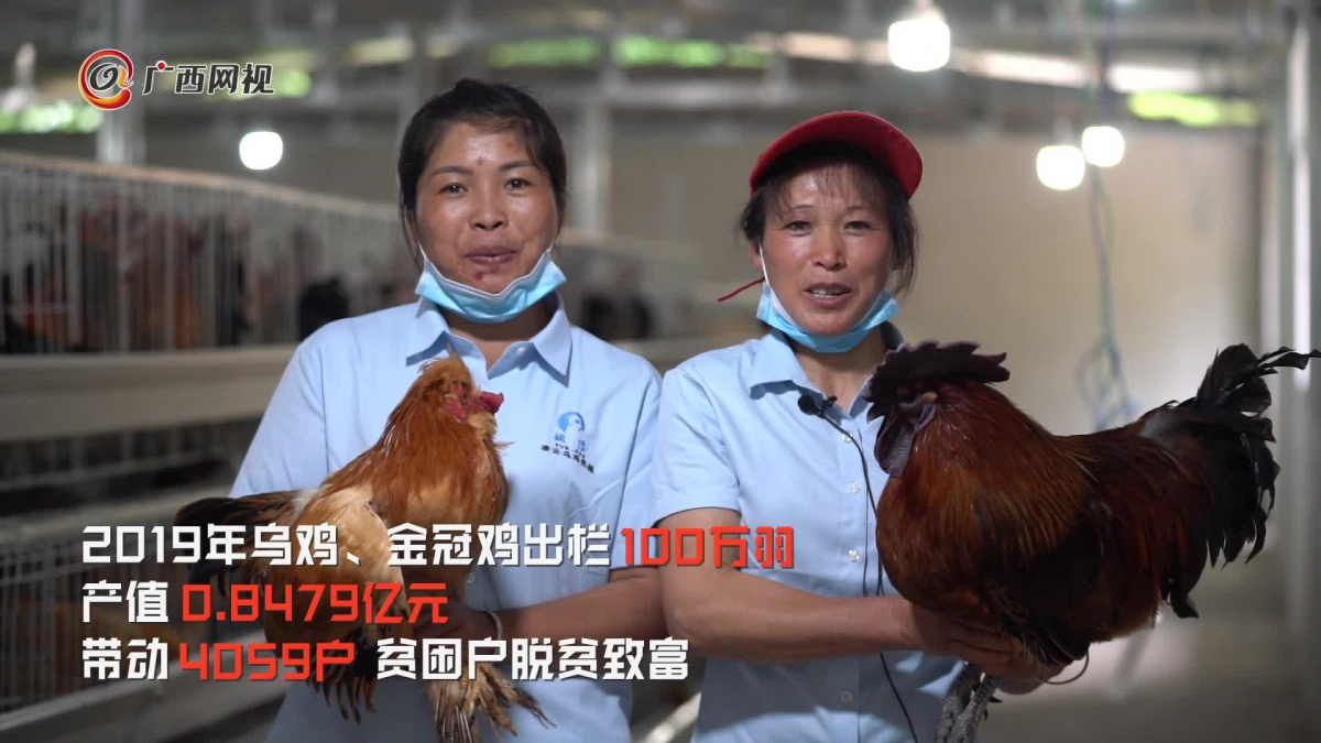 [两会特别策划]五省区联动报道:百色凌云脱贫了