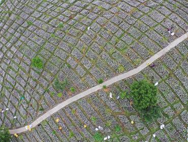 贵州剑河:发展高效山地农业助农增收