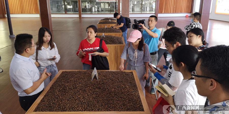"""环江打造特色油茶产业 为脱贫后的好日子加""""油"""""""