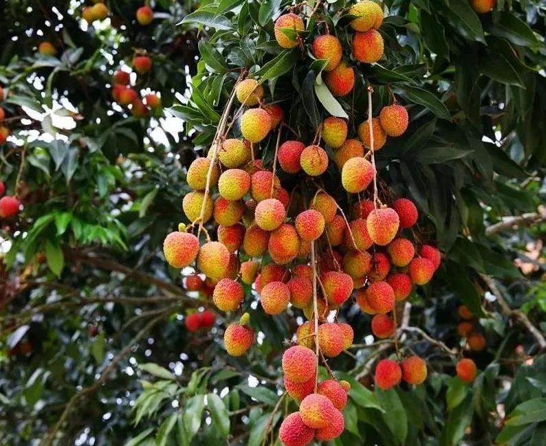 广西21种农产品跻身国家地理标志,有你家乡的吗?