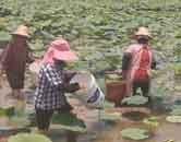 来宾市:产业发展同致富 凝心聚力奔小康