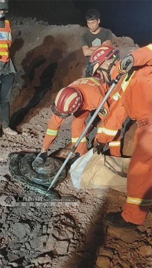 40多斤大蟒现身防城港工地 消防员安全将其抓获