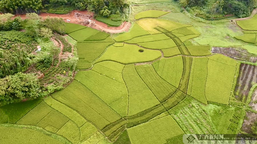 灵山县:在希望的田野上,实现增收致富