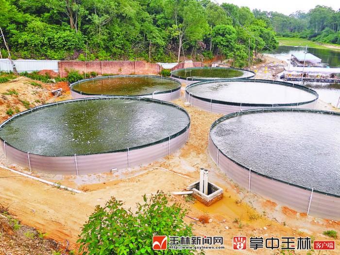 坡地山岭亦可养鱼 玉林打造圆桶养鱼新模式