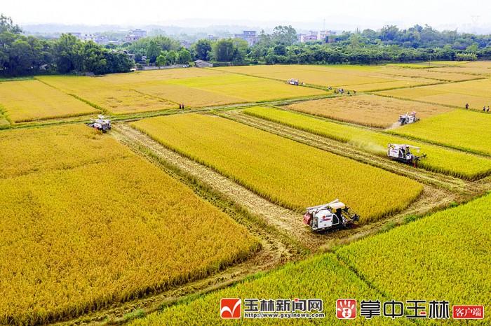 玉林市水稻耕种收综合机械化水平达80.62%