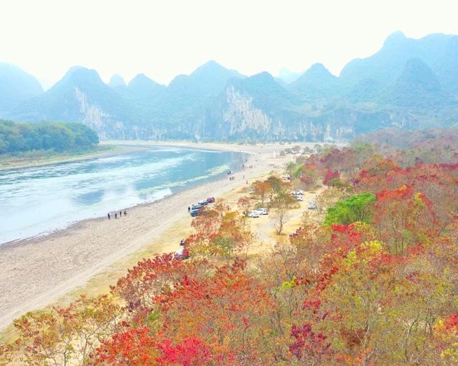 廣西桂林:紅葉盡染烏桕灘(組圖)