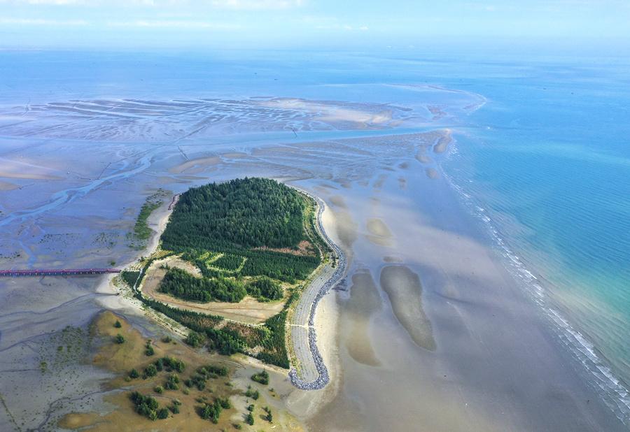 12月10日焦點圖:防城港山心沙島成鳥的天堂