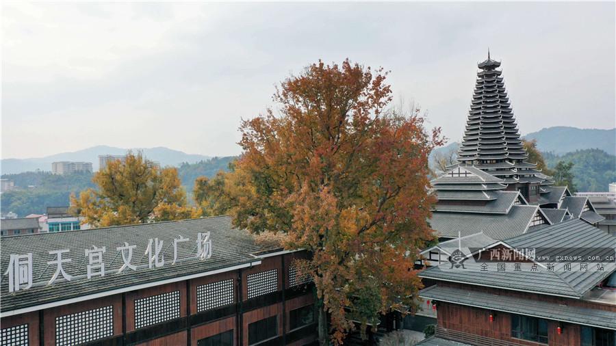 广西三江:枫林披彩美如画