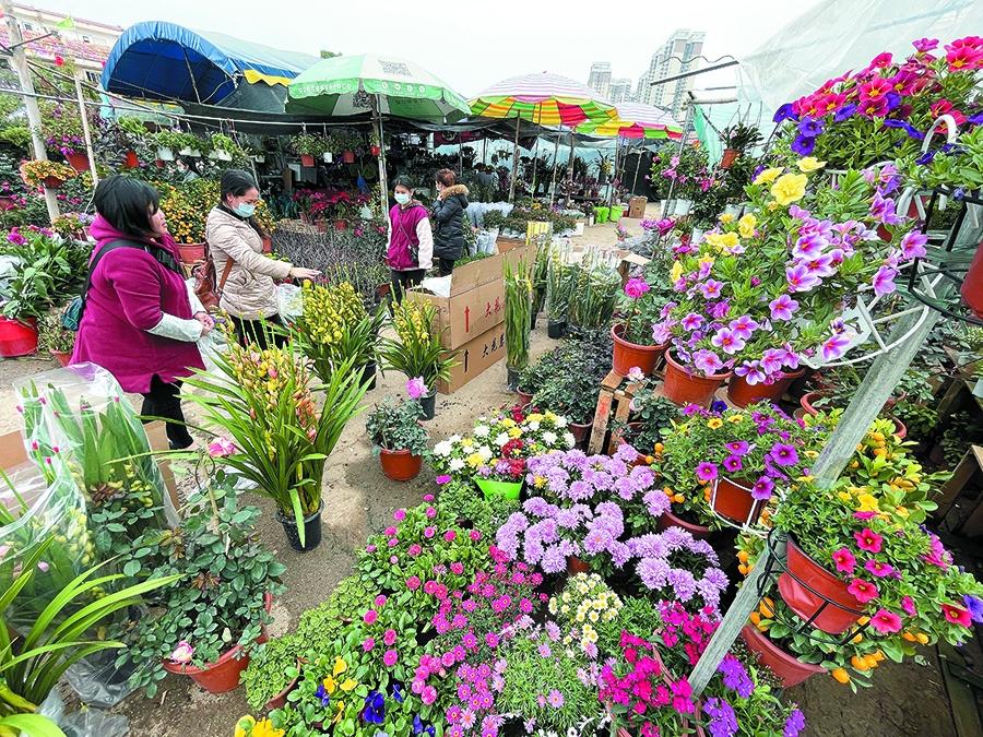年花市场渐火热!广西盆栽植物价格较去年略降(图)
