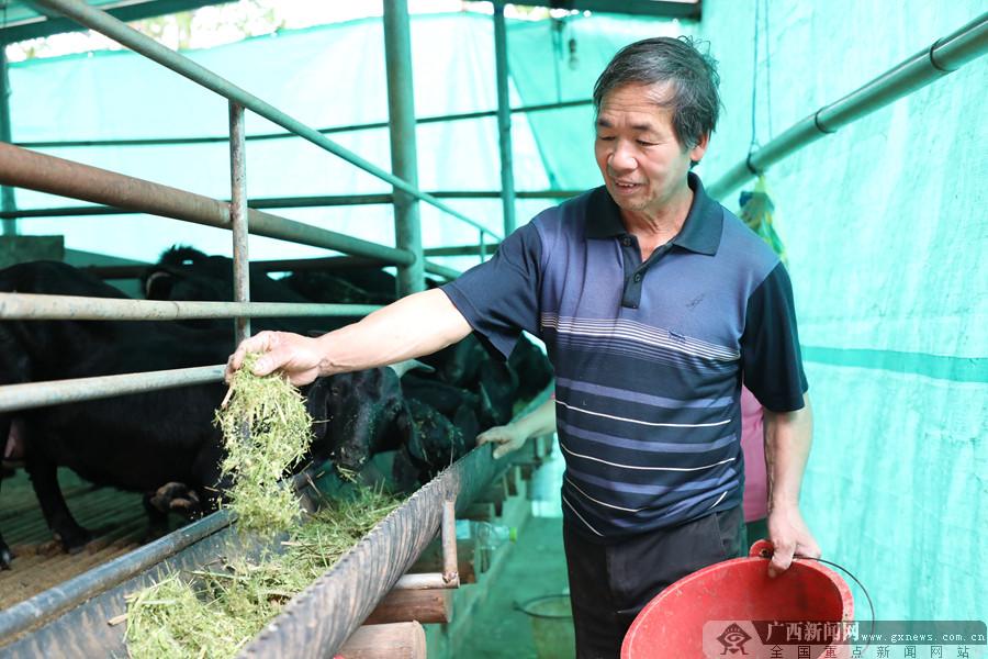 南宁市邕宁区:黑山羊托起脱贫致富梦