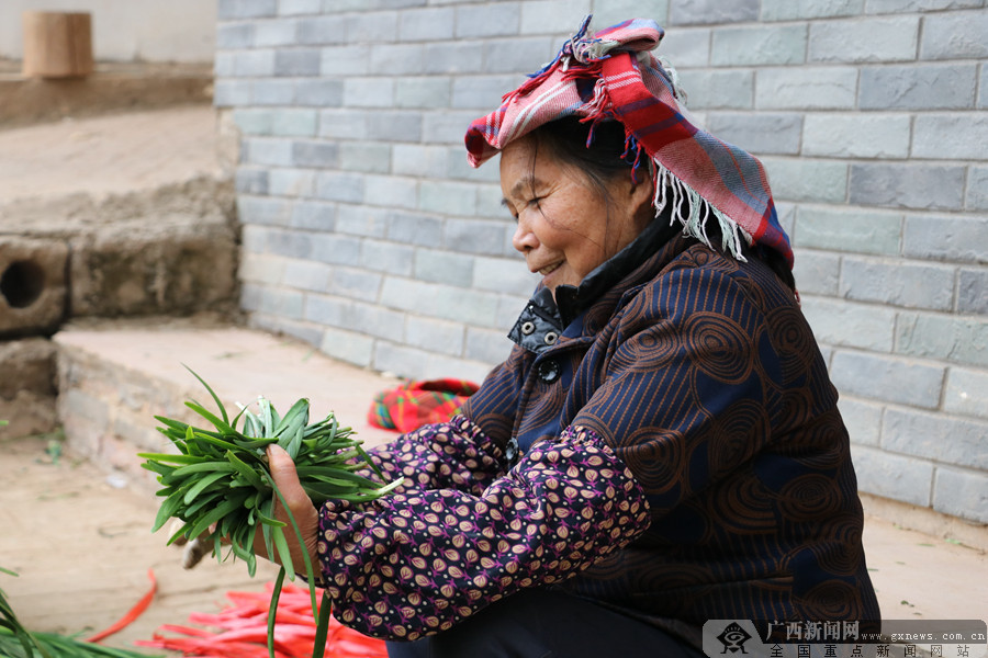 南宁邕宁区采用生态高效循环模式种植韭菜促增收