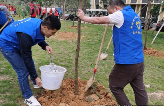 凭祥市税务局组织青年志愿者开展义务植树活动