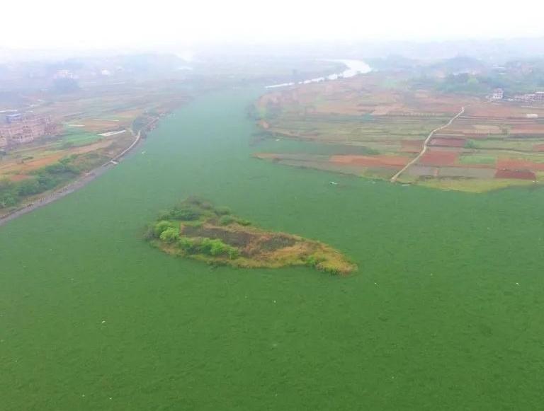 八尺江南宁段水葫芦泛滥,覆盖江面超20万㎡(图)