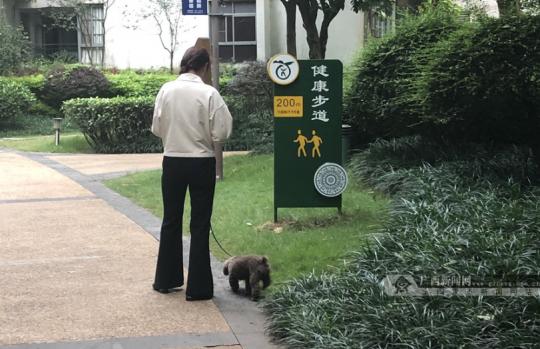 注意!5月1日起这些养狗行为违法!