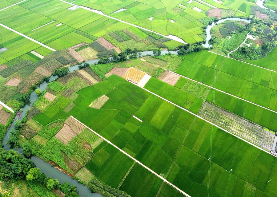 罗城:稻田村庄相映成趣 绘就美丽田园画卷