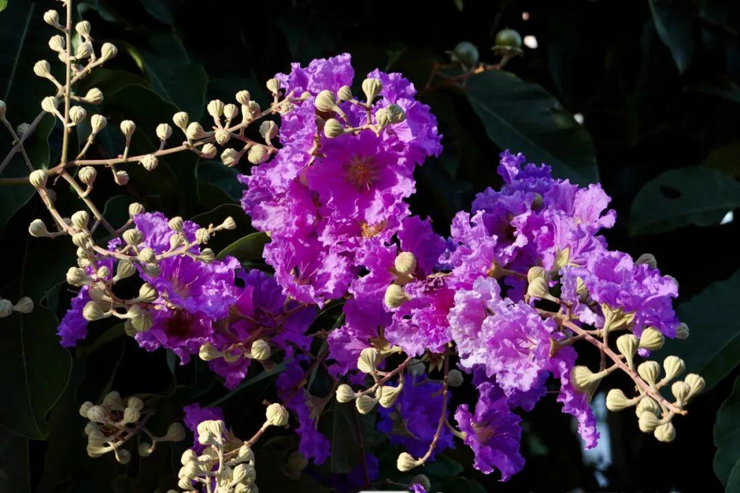 炎炎夏日,各种鲜花扮靓南宁!引众多市民赏花拍照