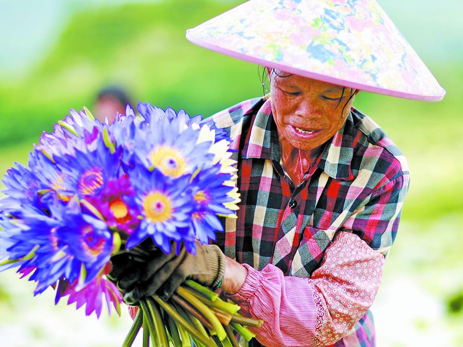 高清图集:莲花飘香幸福路